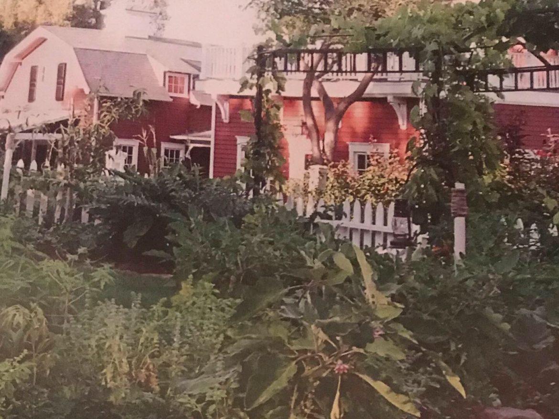 Barbra's Vegetable Garden